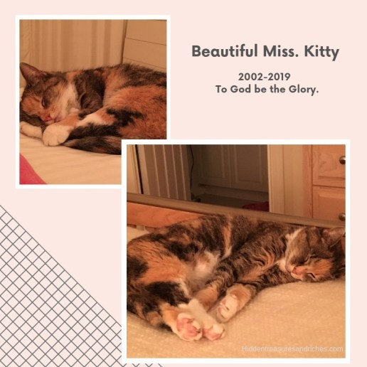 Relentless Love_Kitty 2002-2019