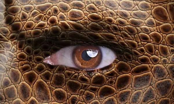 Рептилите живеят сред нас