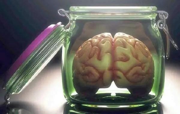 Японски учени отглеждащи мозък твърдят :  Уверяваме ви, че той няма мисловен процес!