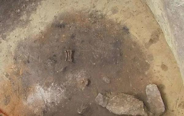 В Полша е открит древен необичаен гроб с човешки тела и лапа на мечка