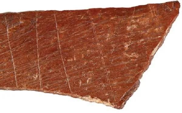 Загадката на животинските кости, изрисувани от древен художник