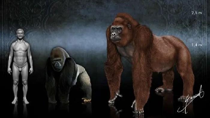 Гигантопитеците – тайните на най-големите маймуни в историята