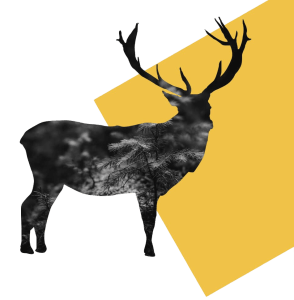 HS Stag background
