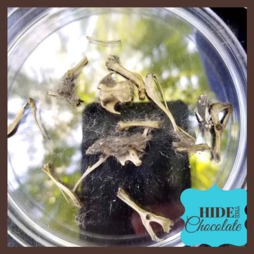 Poppy Bones Petri Dish