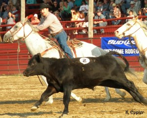 Bill and Blue chasing down a calf at a ranch rodeo.
