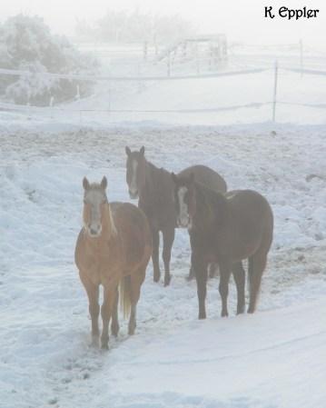 Tater, Zip, and Hempster waiting on breakfast.