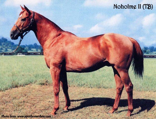Noholme II #1 - sporthorse-datacom