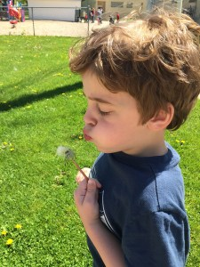 sam with dandelion 2