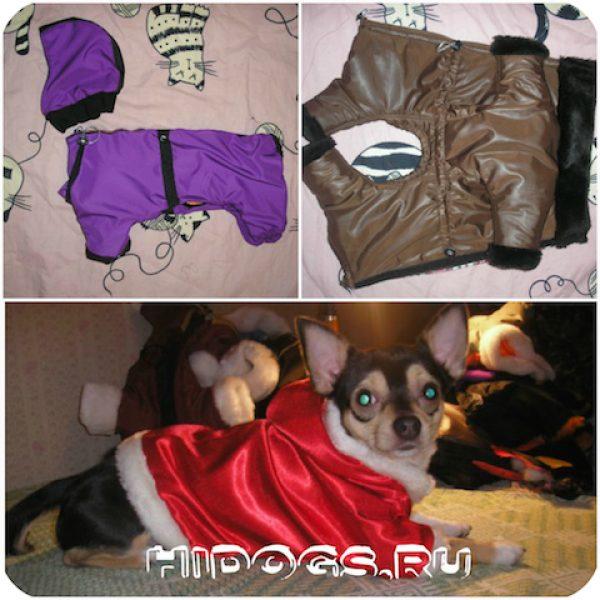 Пример одежды для питомца.