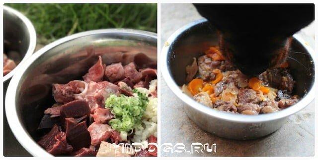 Как правильно кормить взрослых собак курцхаара, щенков, кормящих сук, натуральное питание и сухой корм, что выбрать.