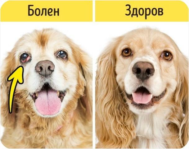 Как понять, что животному нужна помощь, вызов ветеринара, куда вести питомца.