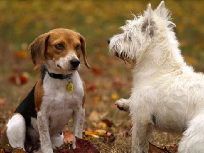 Две собаки.