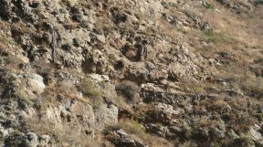 .....unían la costa con la Sierra, en este caso con Cerro de Pasco....