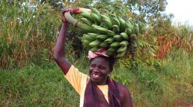 Frau in Uganda trägt Matoke auf dem Kopf