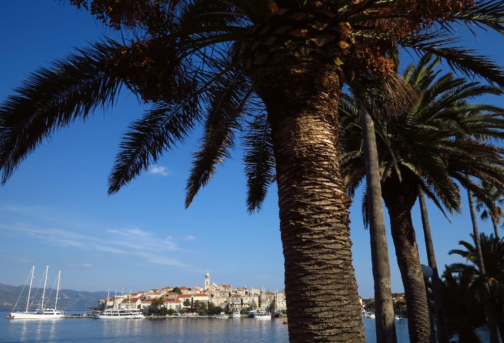 Palme, dahinter historische Stadt