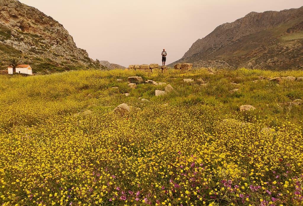 Blumen und verstreute Ruinen auf Kreta