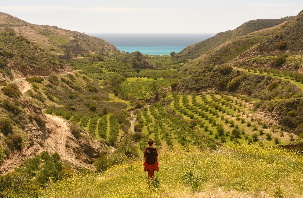 Olivenhain auf Kreta, dahinter das türkisfarbene Meer