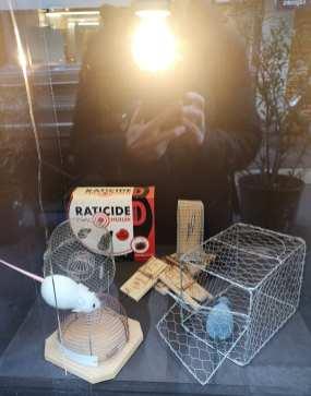 Rattenfallen in einem Schaufenster