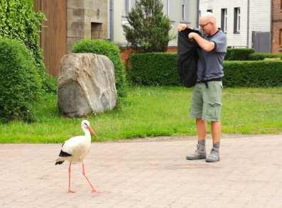Storch vor Mann