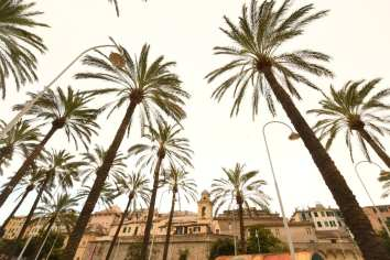 Palmen vor Gebäuden in einer Stadt