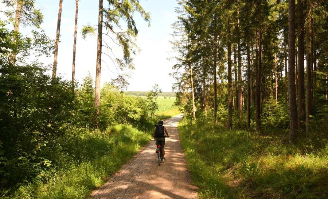 Radlerin radelt durch den Wald