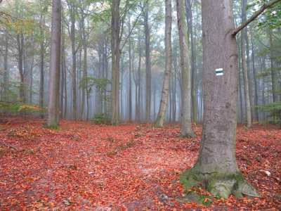 Herbstlicher Wald mit Wandermarkierung