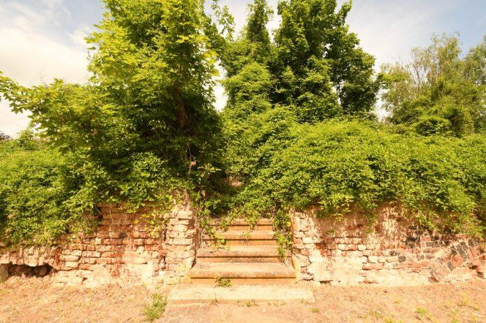 Treppe einer überwucherten Häuserruine