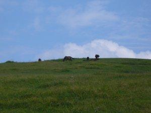小松ヶ丘の御崎馬