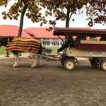 ノーザンホースパークでホーストレッキング(乗馬)体験