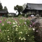 【般若寺】コスモス寺は穴場スポット ~ KKR奈良みかさ荘でランチ