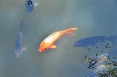 たっちゃん池3