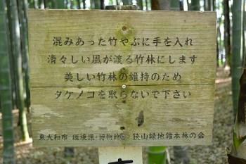 タケノコと竹9
