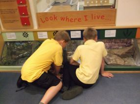 Yr4 visit to Maidstone Museum - June 2015[12]