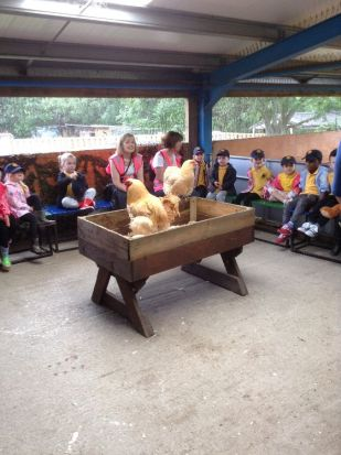 Reception visit Godstone Farm - June 2015[2]
