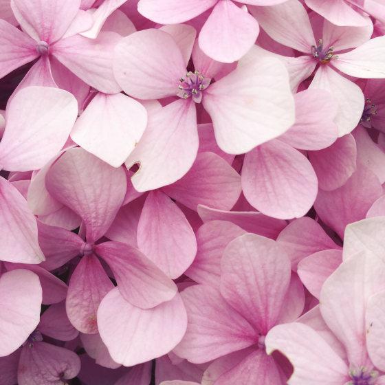 iphone x fleur