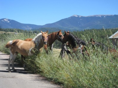Stranger Horses Meeting the Herd