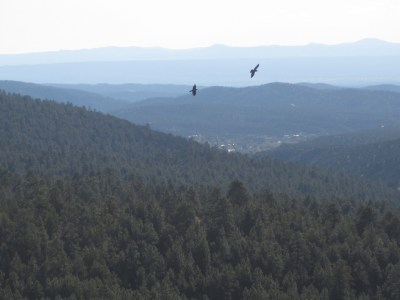 Ravens in the Mountains