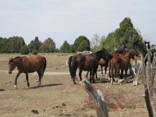 My Llano Herd