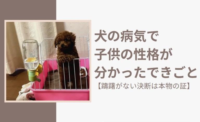 犬の病気で子供の性格が分かったできごと【躊躇がない決断は本物の証】