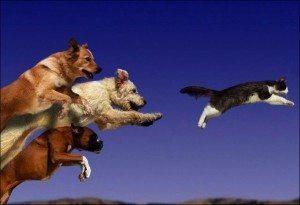 Understanding Dogs Drives & How It Affects Behavior