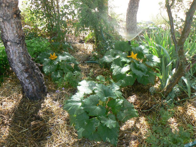 Jan S Stunning Permaculture Garden In Meadview High Desert Dirt
