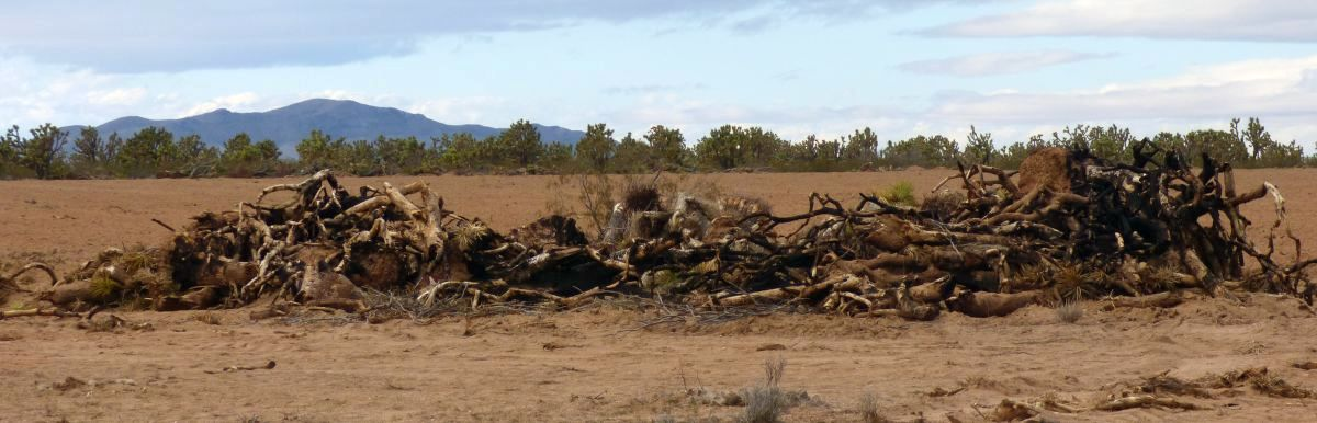 Joshua Trees don't burn well -- they're not trees.