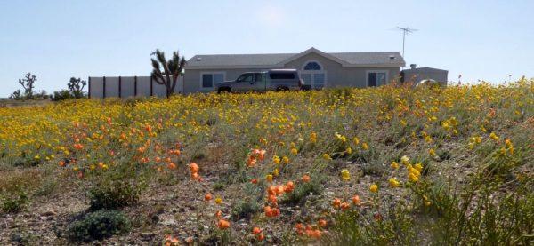 Airbnb - wildflowers