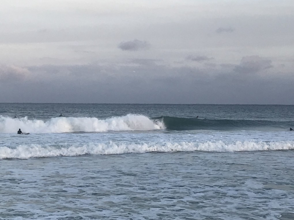 Unknown surfer looks for the doggy door in South Florida
