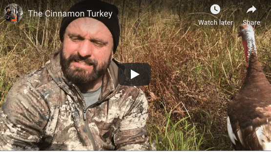 The Truth About Color Phase Turkeys (Video)