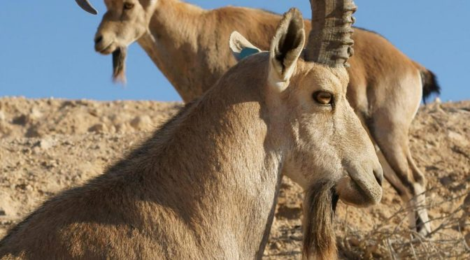 Celebrating The Wildlife Of Israel