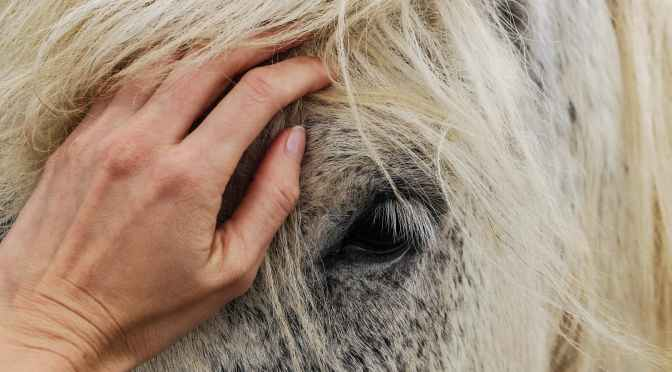 person s hand on white horse s face