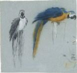 Jean-Baptiste Oudry, Two Parrots, 1730s, Schwerin, Staaliche Museen