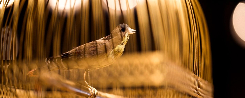Jaquet Droz SINGING BIRD PENDULUM CLOCK