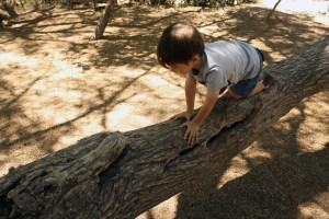 Mountain Stewardship and Outdoor Leadership School Boy in Tree